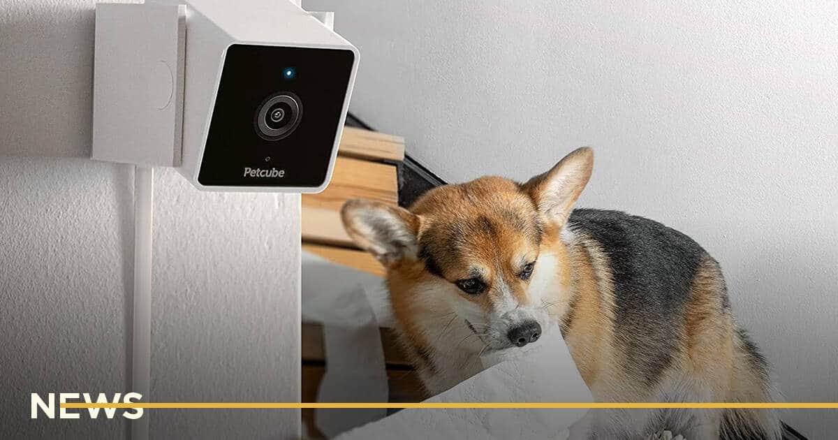 Дизайн-студия O0 выиграла Red Dot Award за Petcube Cam
